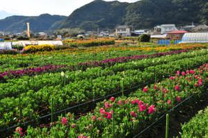 Okinawa_d300_106